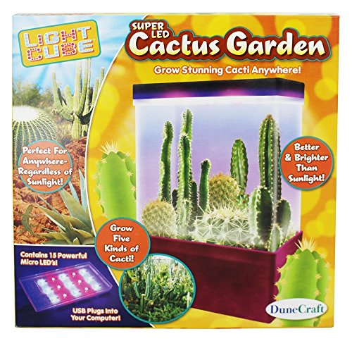 Cactus Garden Led Light Cube in Florida - 1