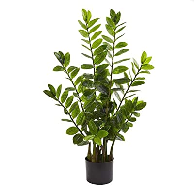 HOTUEEN 20 PCS Zamioculcas Potted Tree Seeds Tropical Indoor Green Ornamental Plant Bonsai : Garden & Outdoor