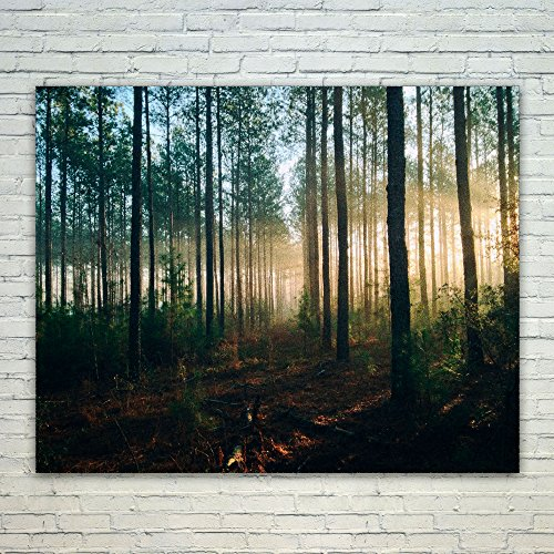 Westlake - Poster Print Wall - Light Forest - Modern Picture Photography Home Decor Office Birthday Gift - Unframed - 16x20in (od9 314) (Rays Crystal Mug)