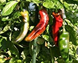 anaheim chili - Sonora Anaheim Chili Pepper-very mild, long green-perfect for chiles rellenos!! (25 - Seeds)