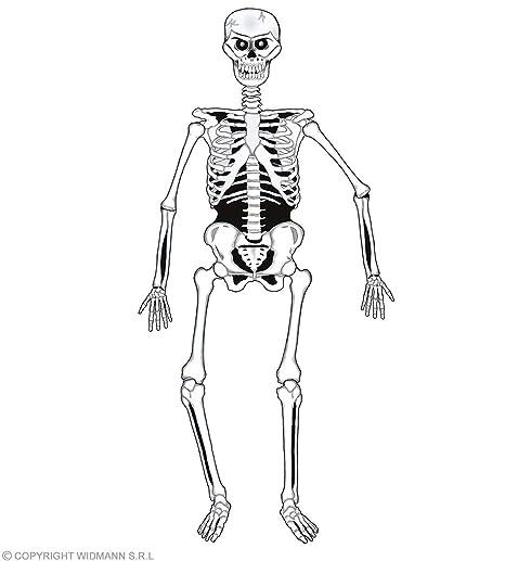 Amazon.com: Disfraz de esqueleto unido para niños, 55.1 in ...