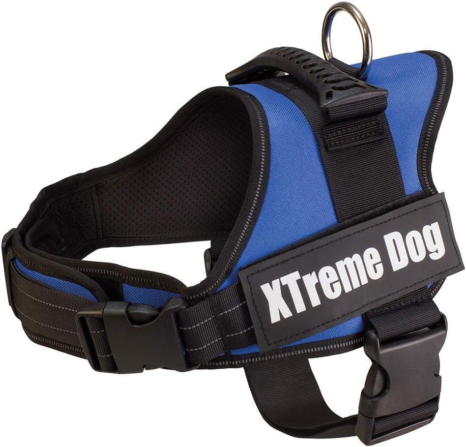 Arquivet 17700 Arnés Xtreme Dog, Azul, XS (44-57 cm): Amazon.es ...