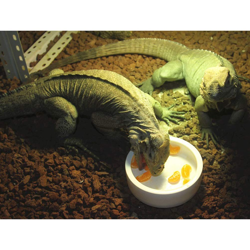 POPETPOP Tazón de Comida de Reptil de Cerámica Antirretorno Plato de Agua de Gusano (Blanco): Amazon.es: Productos para mascotas