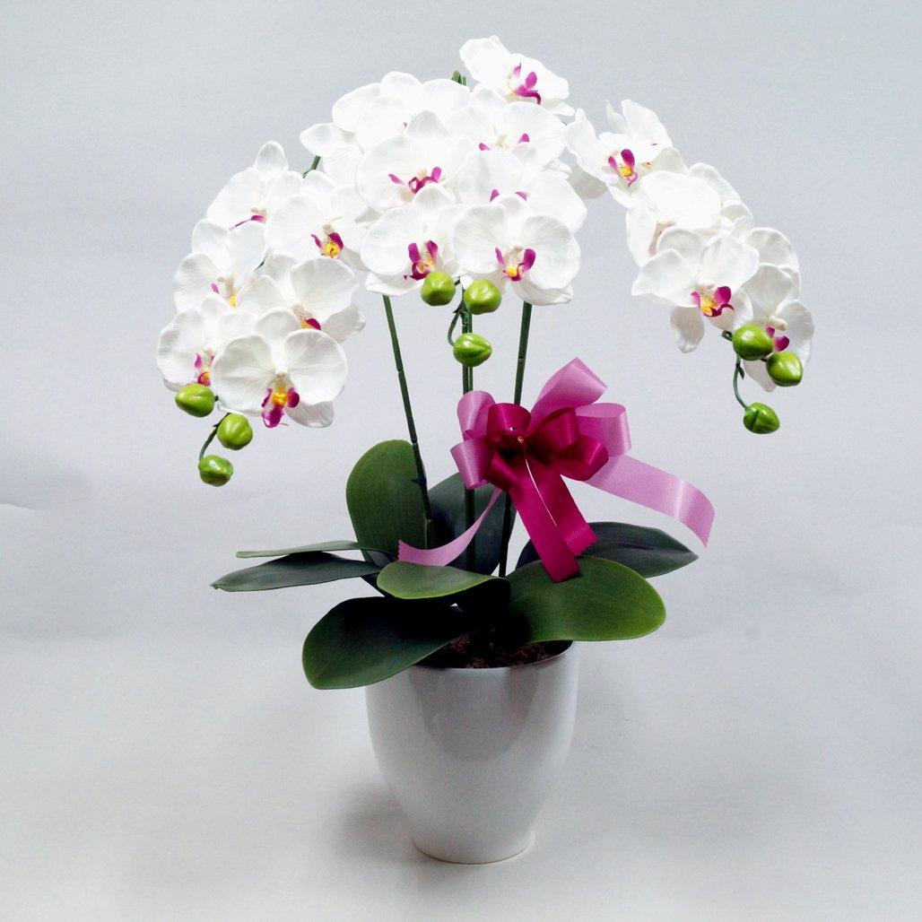 胡蝶蘭3本立(光触媒)陶器鉢入りシルクフラワー造花(ホワイトオーキッド) (白) B01KF8AW5O 白 白