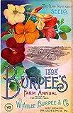 1898 Philadelphia, Pennsylvania Burpee's Farm Annual Vintage Flowers Seed Packet Travel Advertisement Art Poster
