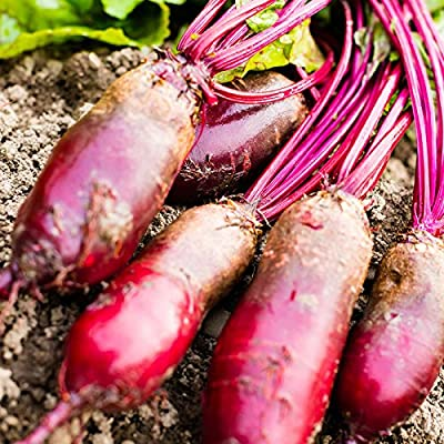 Cylindra Beet Seeds - Non-GMO, Heirloom - Vegetable Garden, Microgreens, Root Crop