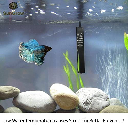 Does a Betta Fish Need a Heater?