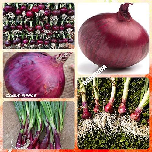 Shoppy Star: Red Bellezas Cebolla Planta de Mezcla (30 Plantas), Estos Dos Hacen un Equipo Dulce