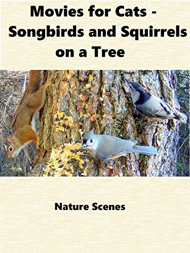 Movies for Cats - Songbirds and Squirrels on a Tree