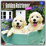 Golden Retriever Puppies 2017 Square (Multilingual Edition)