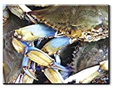 Rightside Design CANCRAB Chesapeake Crab Gallery Wrapped Canvas, 36'' X24'',,36'' X 24''