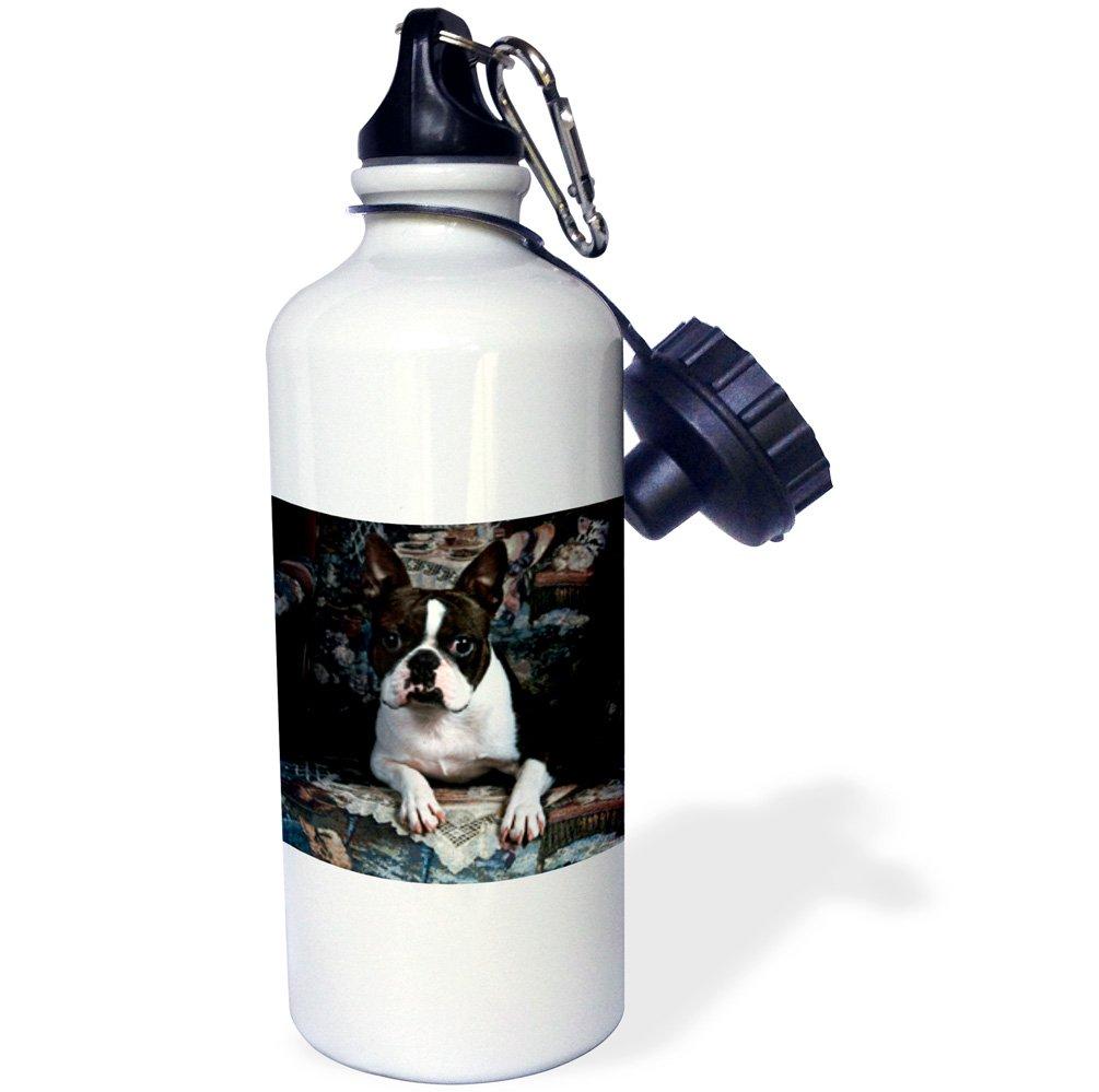 White 21 oz 3dRose wb/_3112/_1Boston Terrier Philippe Sports Water Bottle