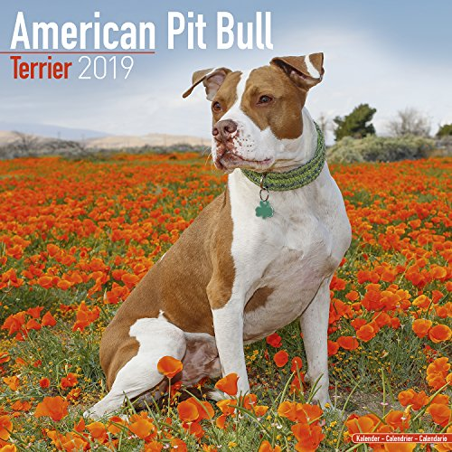 American Pit Bull Terrier Calendar - Dog Breed Calendars - 2018 - 2019 Wall Calendars - 16 Month by Avonside ()