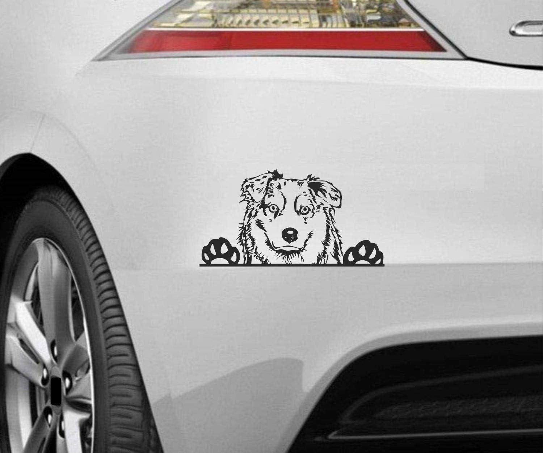 Myrockshirt Peeking Dog Spähender Hund Australian Shepherd Typ7 Ca 20cm Aufkleber Sticker Decal Autoaufkleber Uv Waschanlagenfest Profi Qualität Wandtattoo Auto