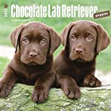 Chocolate Labrador Retriever Puppies Wall Calendar Dogs Labs 2017 {jg} Best Holiday Gift Ideas - Great for mom, dad, sister, brother, grandparents, , grandchildren, grandma, gay, lgbtq.