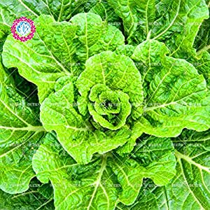 200 pcs/bag Chinese cabbage seeds green organic vegetable seeds for healthy Non-GMO for farm home garden plants seeds 1
