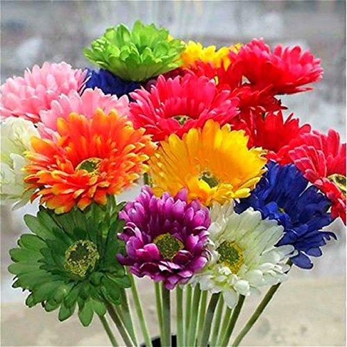ChinaMarket 100 Pcs/bag Gerbera Daisy Seeds New Hybrids Mixed Flower Pot Bonsai Plants Easy To Grow For Jardin Garden Flowers Seed -