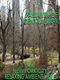 fall in new york - Fall view of Central Park in New York City relaxing ambient video