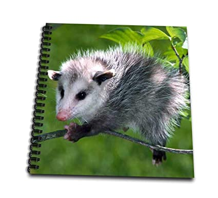 Amazoncom 3drose Db10093 Opossum Mini Notepad 4 By 4 Arts