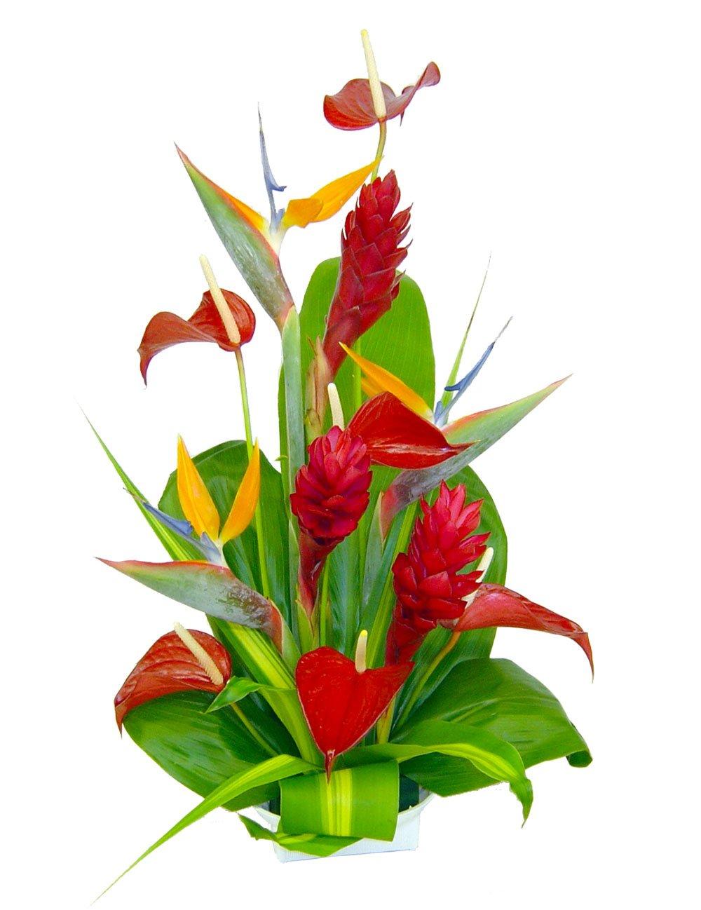 Amazon Hana Tropical Hawaiian Flowers Fresh Cut Format Mixed