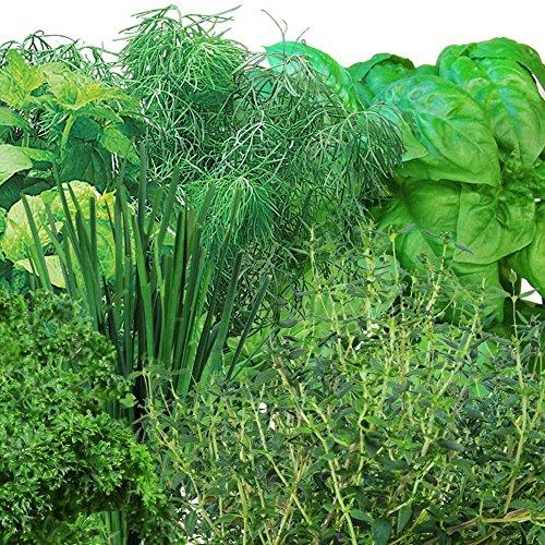 AeroGarden Gourmet Herb Seed Pod Kit 7 Pod Home Kitchen Features