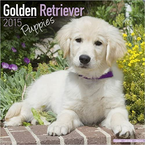 Golden Retriever Puppies 2015 Wall Calendar by Avonside