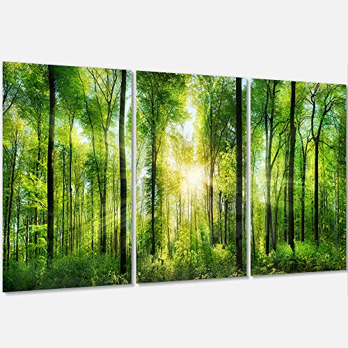 Panorama Landscape (Designart MT7211-3P Forest with Rays of Sun Panorama - Landscape Glossy Metal Wall Art,Green,36x28)