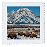 3dRose USA, Wyoming, Grand Teton National Park. Bison and Winter Landscape. - Quilt Square, 14 by 14-Inch (qs_206298_5)