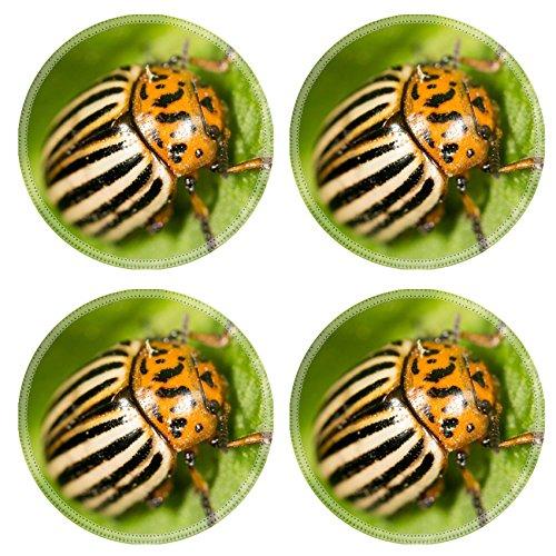 luxlady-round-coasters-image-id-39777597-colorado-potato-beetle-on-a-green-leaf