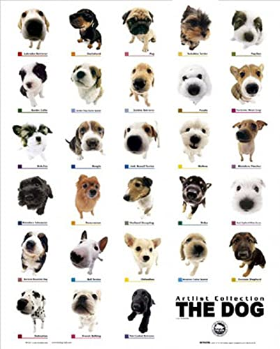 Pop Chart Lab The Diagram Of Dogs Poster 61 X 46 Cm Multi