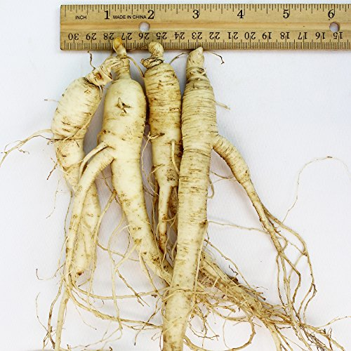 WOHO Cultivated Fresh Ginseng American Ginseng Jumbo 8oz (6-8 Roots) by WOHO