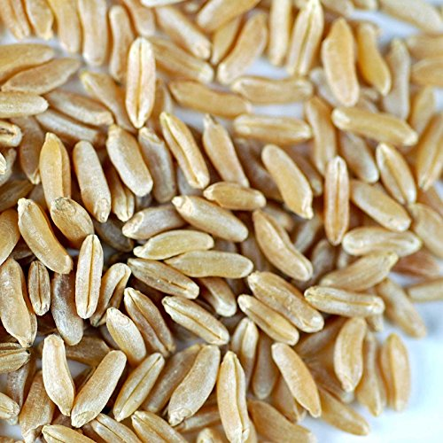 Organic Kamut Seed- 5 Lb- Kamut Grain Seeds- For Growing Kamut Grass, Flour, Bread, Baking, Cooking, Food Storage, Sprouting by Handy Pantry (Image #1)