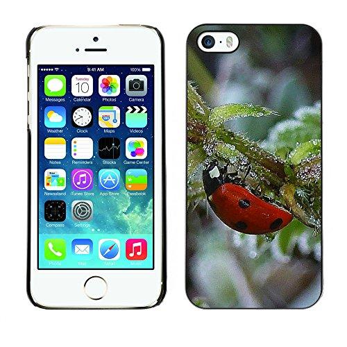 Premio Sottile Slim Cassa Custodia Case Cover Shell // F00006866 scarabée // Apple iPhone 5 5S 5G