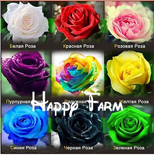 The Best Seller 1,800 SEEDS (THIS INCLUDE 9 PACKS EACH COLOR 200 SEEDS)CHINESE ROSE SEEDS - Rainbow Pink Black White Red Purple Green Blue Rose (Basil Hydrangea Planter)