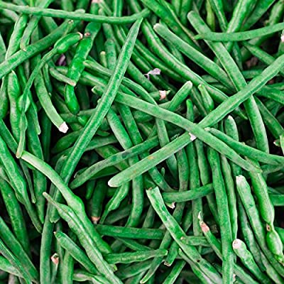 Jade Bush Bean Seeds - Non-GMO, Heirloom Green Bean Seeds - Vegetable Garden Seeds