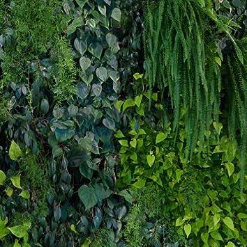 E022601 0 Foto Tapete Vlies Wandbild Garten Dschungel Natur Grün