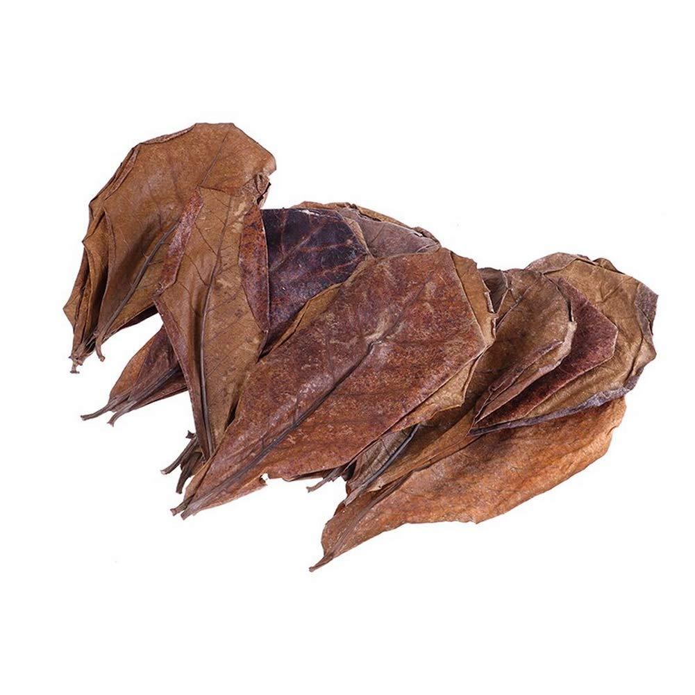 Crazy Shop Premium Grade Indian Almond Leaves Improve Comfort Water Balance for Betta Fish Aquarium Simulating Natural Aquatic (Large (100-Pc.)) by Crazy Shop (Image #2)