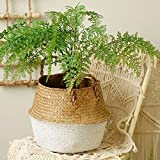 Sinwo Seagrass Basket,Seagrass Wicker Basket Wicker Basket Flower Pot Folding Basket Dirty Basket Tote for Storage, Laundry, Picnic, Plant Pot Cover
