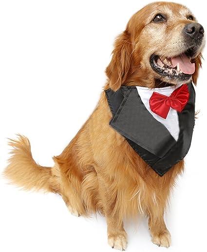 Amazon.com: petfavorites perro (Tamaño Grande, – Disfraz de ...