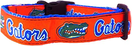Team Color Small NCAA Florida Gators Dog Leash