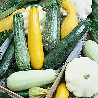 Mifutu Seed Sand Plants - 50pcs Rare Mix of Zucchini (Yellow, Green and White), Organic Seeds Cold Resistant Vegetable Seeds : Garden & Outdoor
