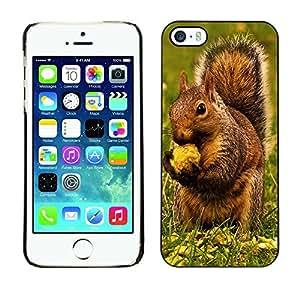 YOYO Slim PC / Aluminium Case Cover Armor Shell Portection //Brown Squirrel & Nut //Apple Iphone 5 / 5S
