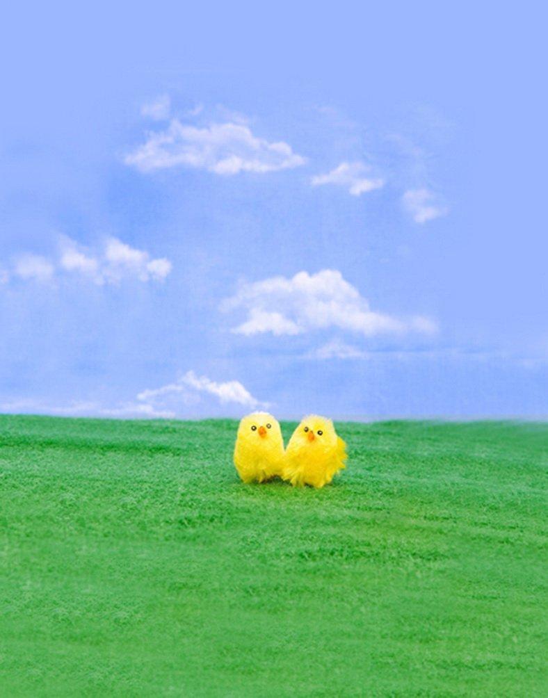 Grass Blue Sky chick写真Backdrops写真小道具Studio背景5 x 7ft   B01HRK5FRI