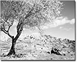 Bethlehem, Palestine from the South 1945 8x10 Silver Halide Photo Print