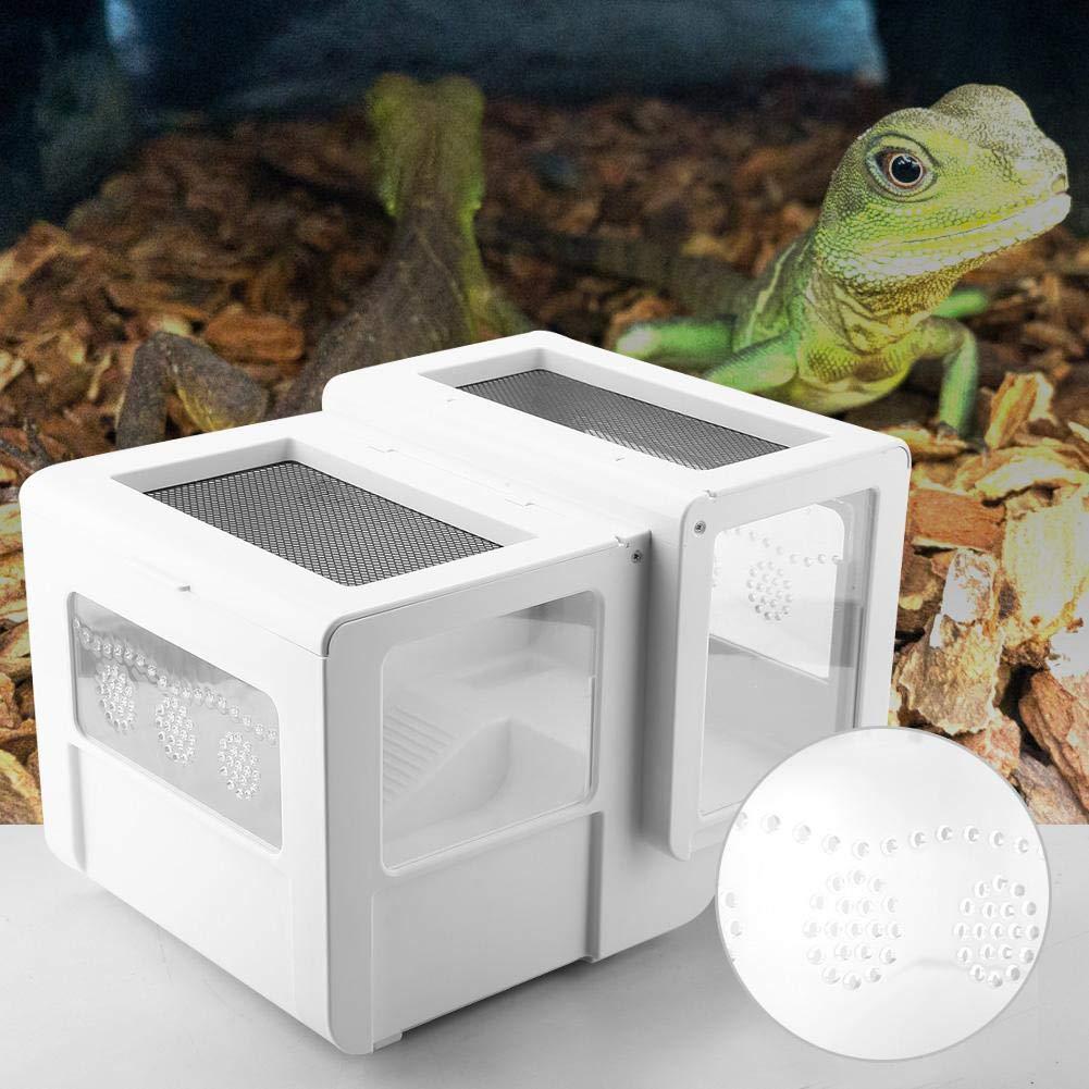 Caja de cría de Reptiles Jaula para tarántula Insecto Lagarto ...