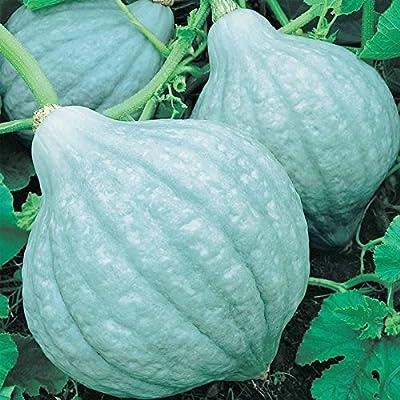 Blue Hubbard Winter Squash Garden Seeds - Non-GMO, Heirloom - Vegetable Gardening Seed
