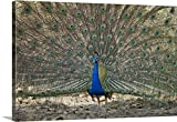 Canvas On Demand Premium Thick-Wrap Canvas Wall Art Print entitled Peacock displaying its plumage Bandhavgarh National Park Umaria District Madhya Pradesh India