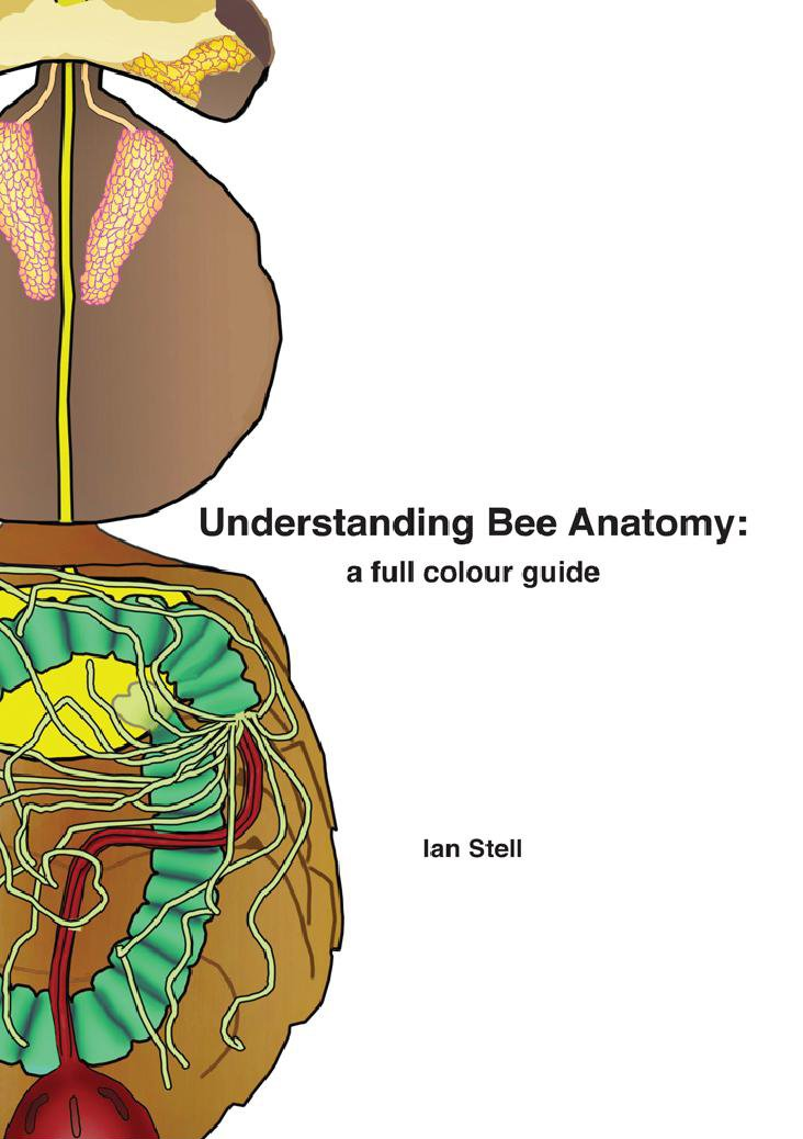 Understanding Bee Anatomy: A Full Colour Guide: Ian Michael Stell ...