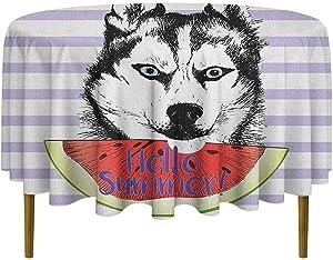 ScottDecor Alaskan Malamute Food Round Tablecloth Cute Animal Eating Watermelon Slice Fresh Summer Themed Striped Artwork Dinning Tabletop Multicolor Diameter 50