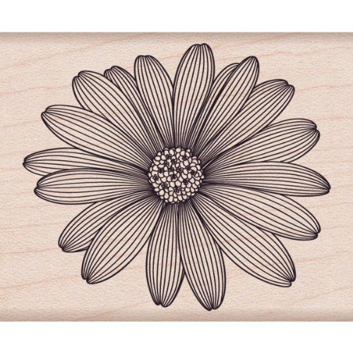 Etched Daisy - Hero Arts Etched Daisy Woodblock Rubber Stamp